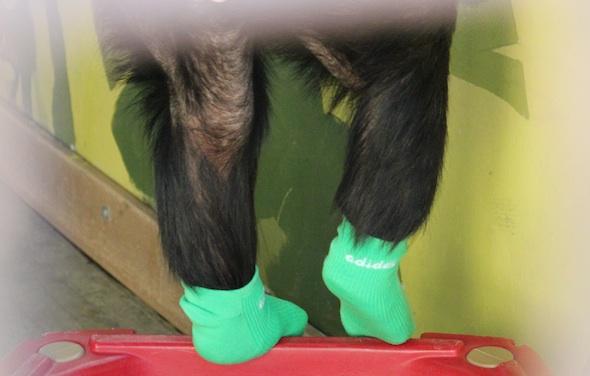 web_for_Sandy_Missy_feet_stand_wear_green_sock_both_pr_dg_IMG_4223