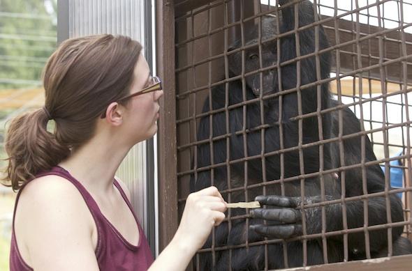 Charlotte Ross at Chimpanzee Sanctuary Northwest