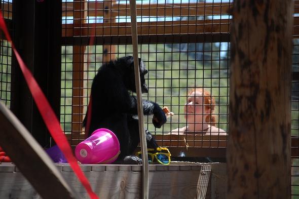 web Foxie caregiver elizabeth troll party enrichment cute outdoor area DSC_0191