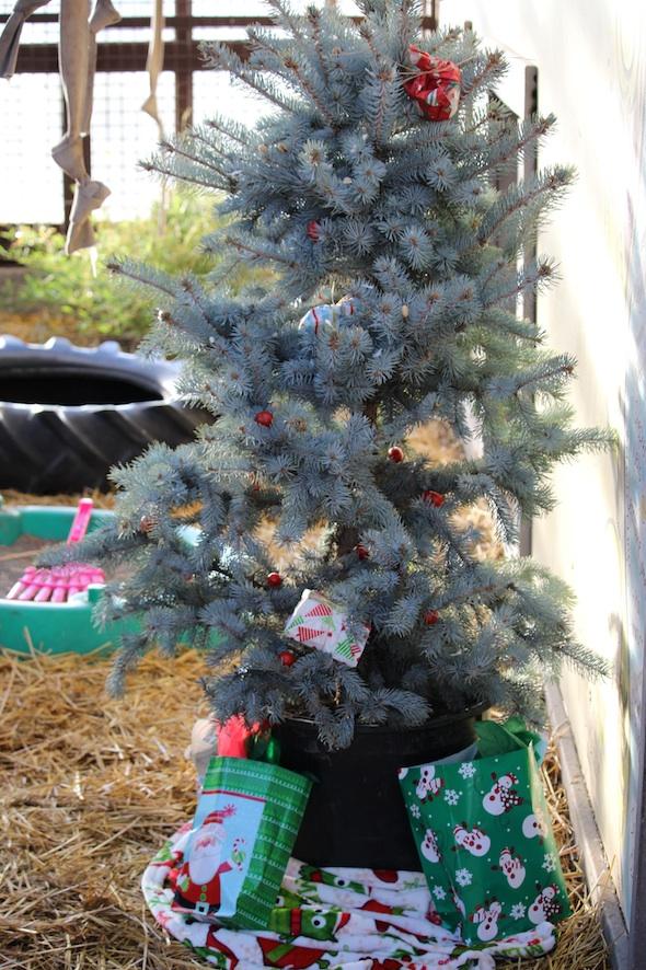 fb_web_christmas_tree_presents_party_set-up_gh_dm_IMG_1306