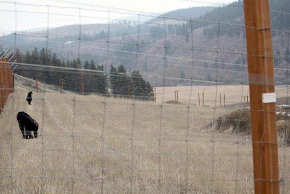 web_Jamie_missy_patrol_missy_bipedal_mountains_YH_jb_IMG_6847