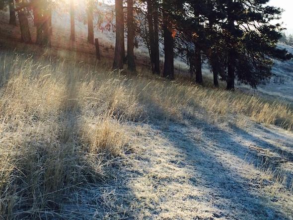 web_YH_morning_frost_kd