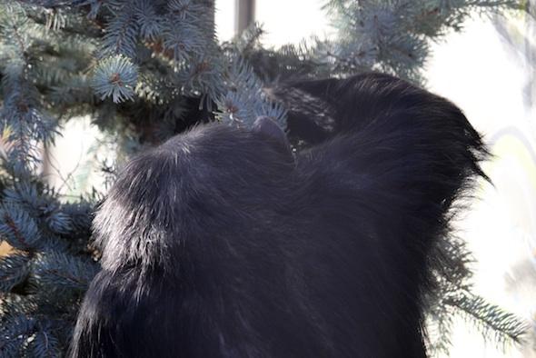 web_negra_forage_christmas_tree_party_gh_dg_IMG_1321