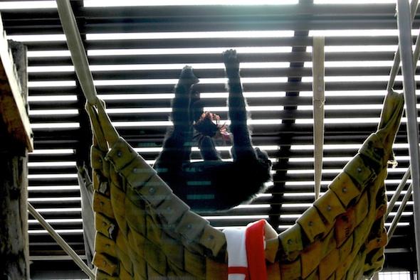 web_Foxie_climb_on_ceiling_Dora_doll_in_mouth_GH_ek_IMG_8194