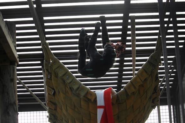 web_Foxie_climb_on_ceiling_Dora_doll_in_mouth_GH_ek_IMG_8196