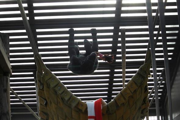 web_Foxie_climb_on_ceiling_Dora_doll_in_mouth_GH_ek_IMG_8197