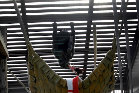 web_Foxie_hang_upside_down_on_ceiling_Dora_doll_in_mouth_GH_ek_IMG_8198