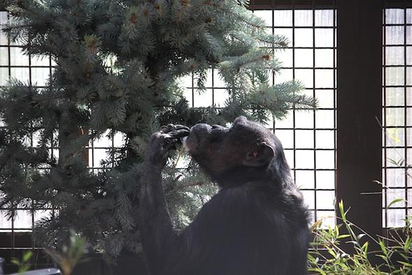 web_Jody_inspect_tree_leftovers_GH_kh_IMG_8570