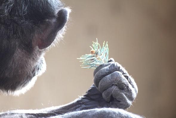 Jody holding tree bit