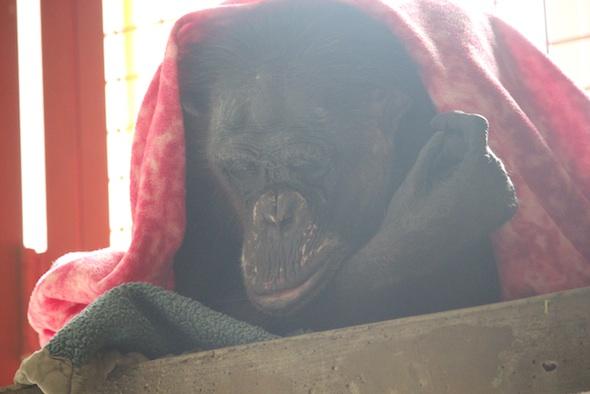 web_Negra_sleep_blanket_nest_poncho_catwalk_PR_ek_IMG_8998