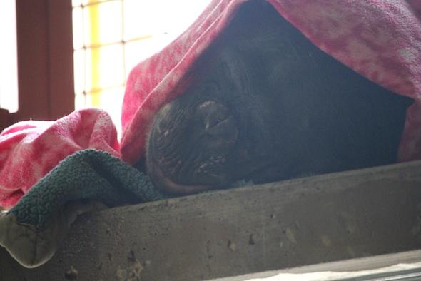 web_Negra_sleep_blanket_nest_poncho_catwalk_PR_ek_IMG_9000