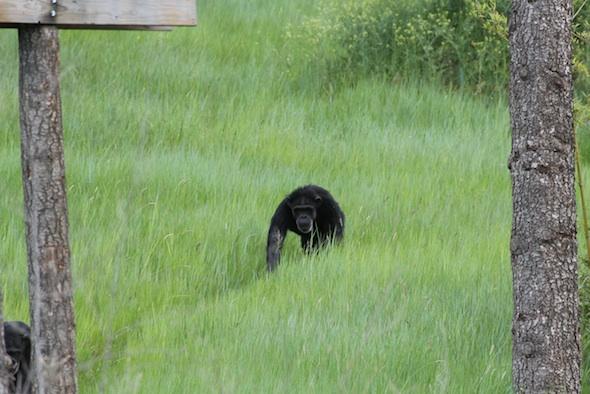 web_Annie_walk_tall_grass_YH_kh_IMG_2059