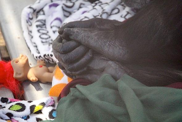 web_jody_hands_holding_feet_troll_kd_IMG_4181
