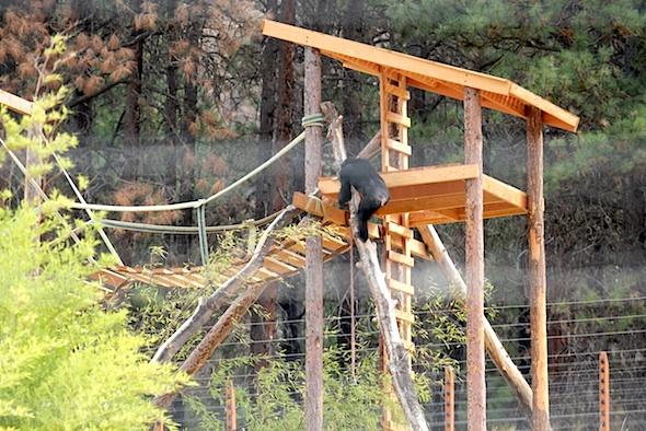web_missy_climb_down_log_from_carlenes_tower_kd_IMG_4171