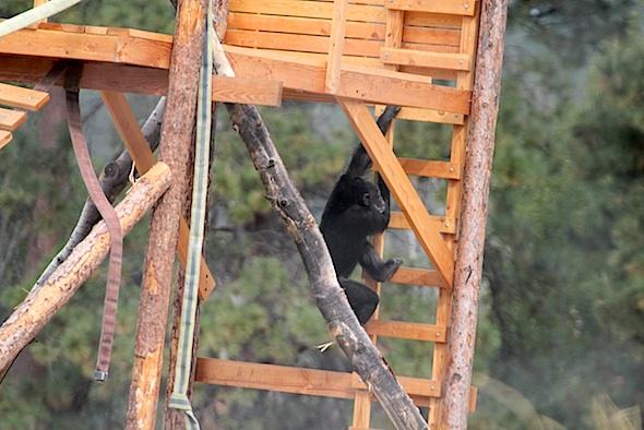 web_missy_climb_ladder_jamies_tower_kd_IMG_4167