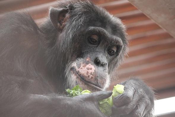 web_Burrito_eat_broccoli_kale_food_lunch_GH_ek_IMG_6107