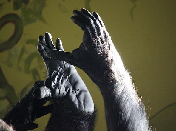 web_annie_clap_feet_together_closeup_kd_IMG_6779