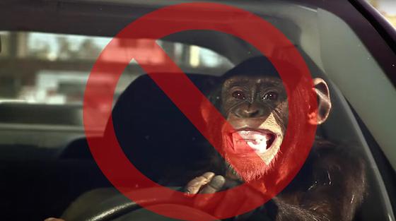 web_chimp-driving-car-trunk-monkey-no-sign copy