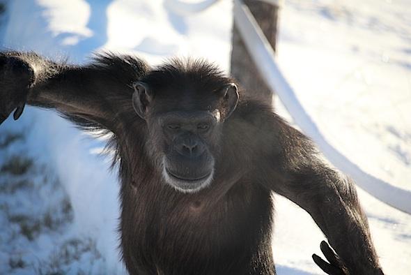 web_annie_walk_bipedal_in_snow_yh_kd_IMG_7614