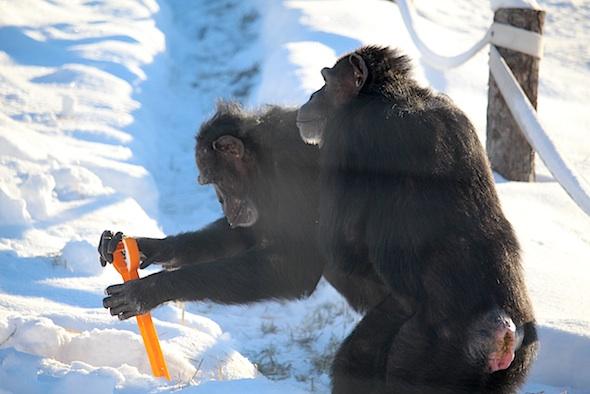 web_jamie_annie_shovel_snow_yh_kd_IMG_7610
