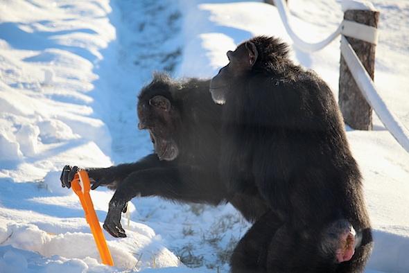 web_jamie_shovel_snow_annie_look_yh_kd_IMG_7609