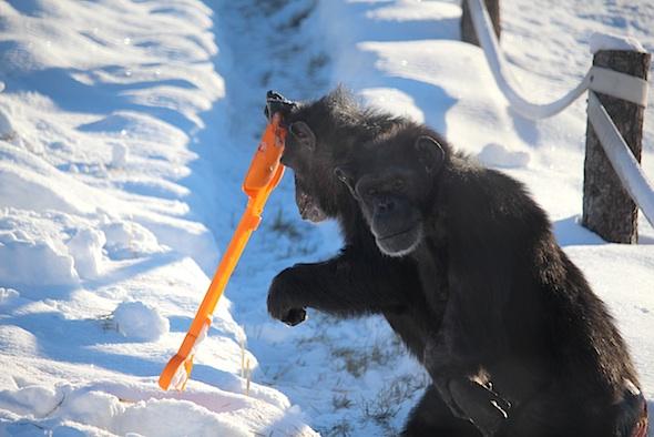 web_jamie_shovel_snow_annie_watch_kd_IMG_7605