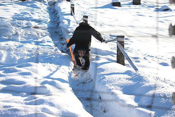 web_jamie_walk_yh_shovel_snow_III_kd_IMG_7593