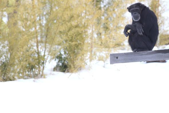 Annie snow background