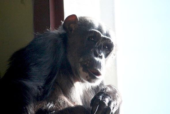 Negra in front of window