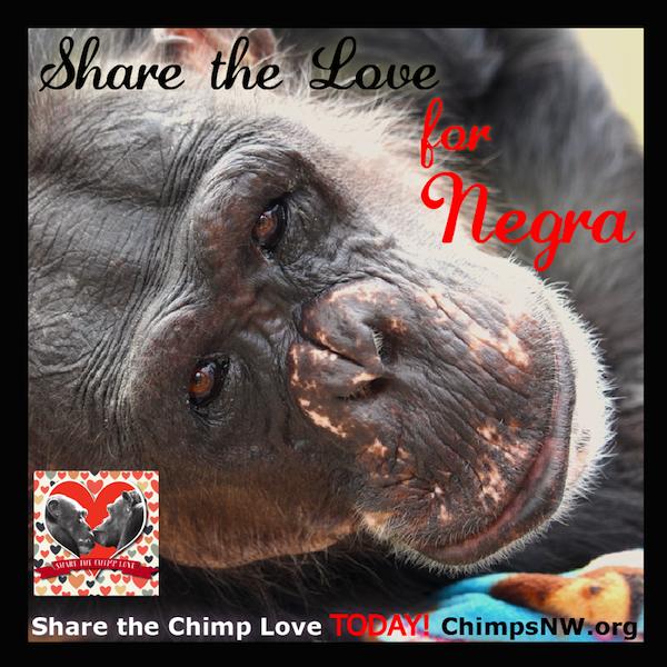Negra Share the Love pic