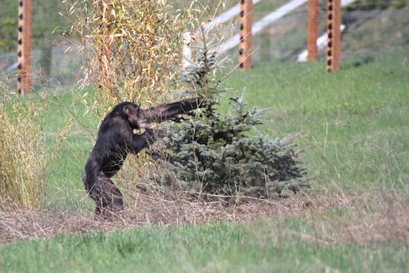 web_Missy_grab_christmas_tree_YH_jb_IMG_0878
