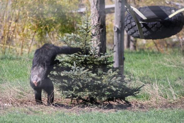web_Missy_reach_into_christmas_tree_YH_jb_IMG_0863
