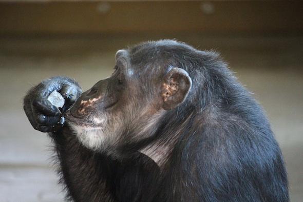 Missy eating ice