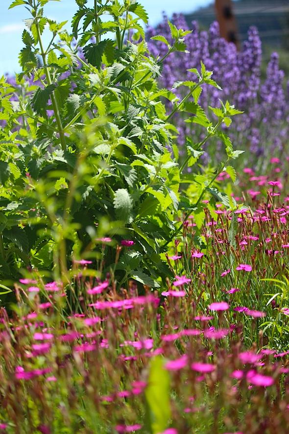 web_flower_garden_kd_IMG_3733