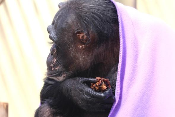 Negra holding pinecone