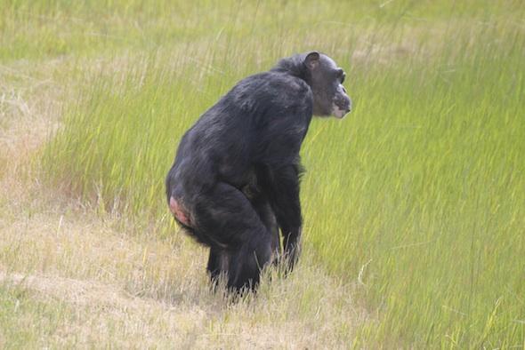 Negra standing