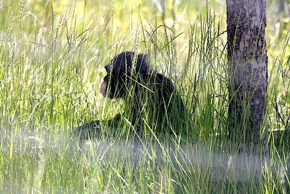 web_jamie_profile_hidden_in_grass_kd_IMG_4270