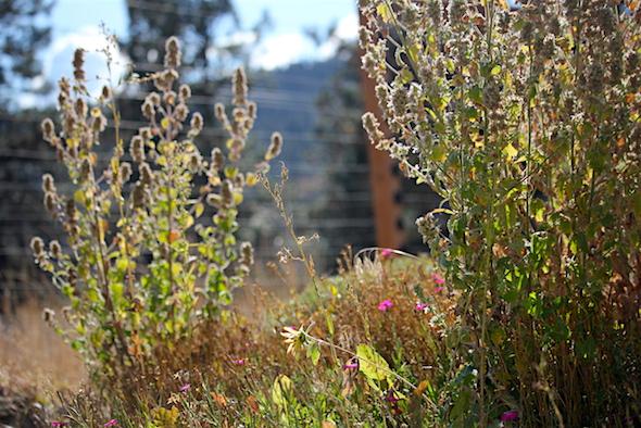 web_garden_turning_to_autumn_kimg_7335