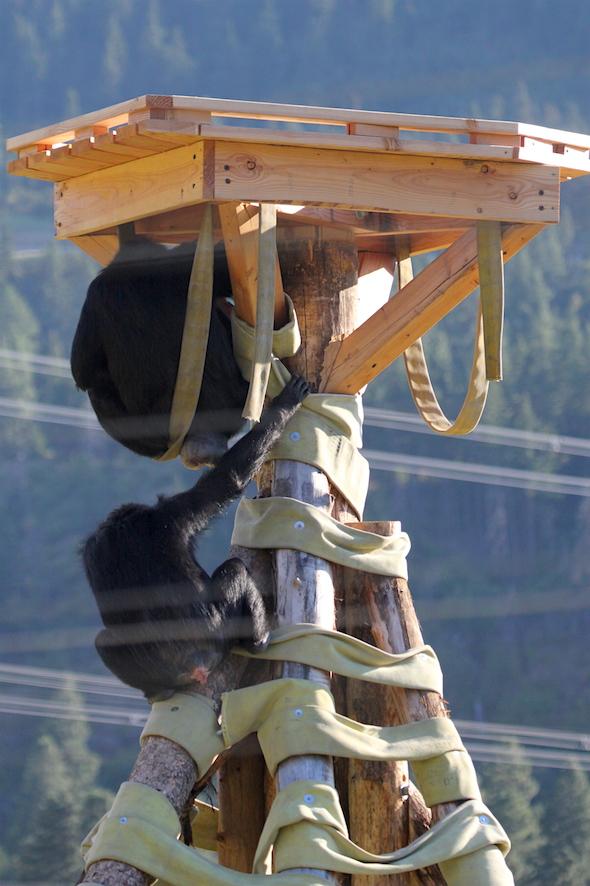 web_jamie_under_crows_nest_missy_climb_up_kd_IMG_4566