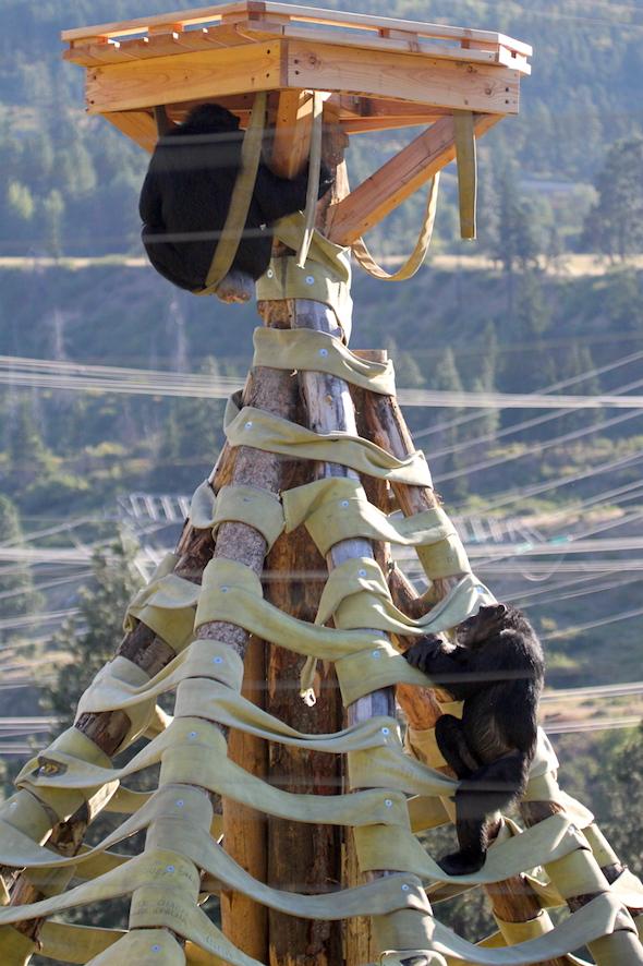 web_jamie_under_crows_nest_missy_climbing_up_kd_IMG_4558