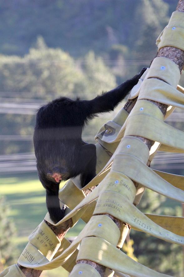 web_missy_climb_twister_back_to_camera_kd_IMG_4573