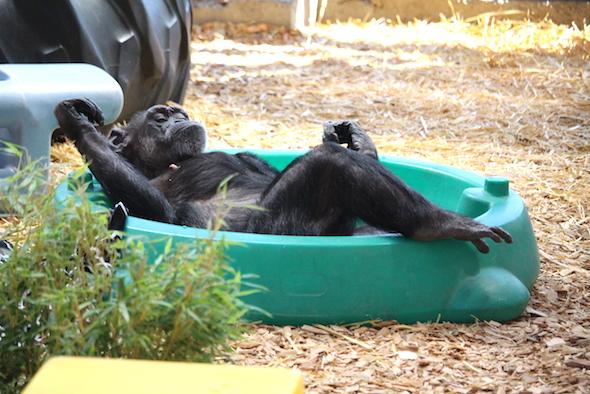 Jody relaxing