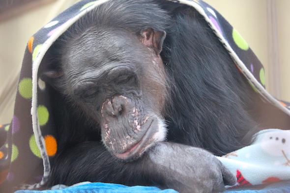 Negra sleeping