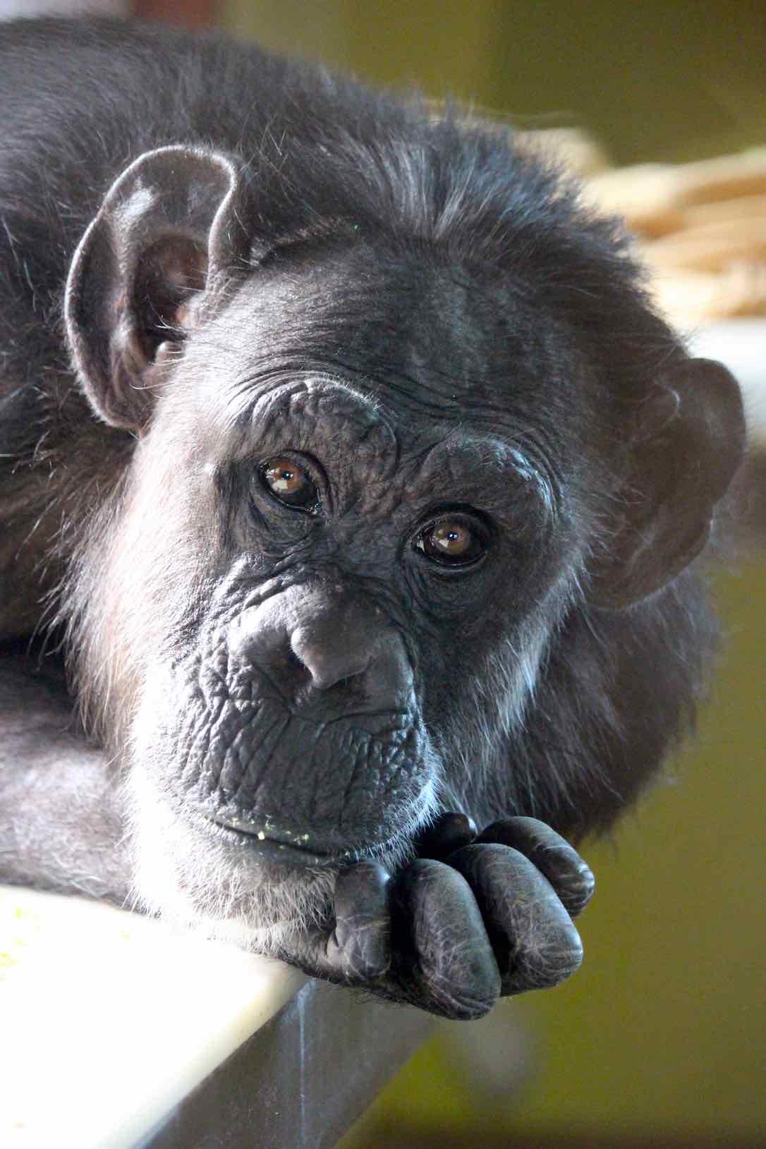 pretty-shaved-ape-photos-farrell